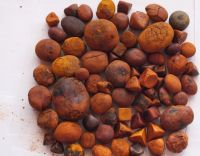 Ox cattle Gallstone