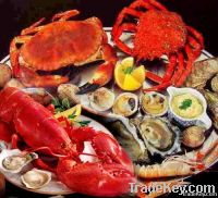 aldera sea food