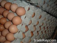 Fresh Brown And White Chicken Eggs