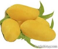 Fresh Sindhri Mango