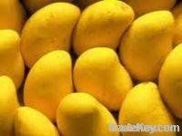 Fresh Anwar Ratol  Mango