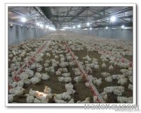 chicken farming equipment
