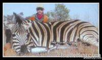 Nyaka Safari's
