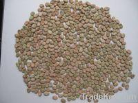Australian Broad Beans,broad beans importers,broad beans buyers,broad beans importer,buy broad beans,broad beans buyer