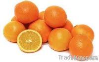 fresh Navel Orange, Valencia