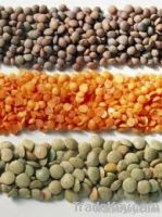 Red lentils, Sesame Seed, Mung beans, Moringa seeds