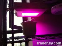 led grow light square type
