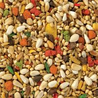 Premium Dried Seeds