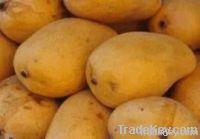 Fresh Fruits ( Specially Mangoes and Mandarin)