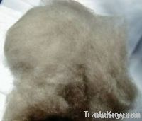 100% Dehaired brown Cashmere Fiber