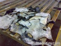Wet salted cow head skin for sale