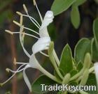 HoneySuchle Flowers Extract, chlorogenic acid5-99%