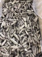 Wholesale price dried sea cucumber