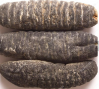 High grade Dry Sea Cucumber
