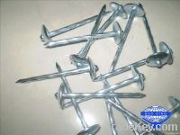Twisted or smooth shank umbrella head electro galvanized roofing nail