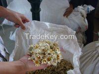 Natural pyerthrum extract pyrethrins 25%,50%, 70%