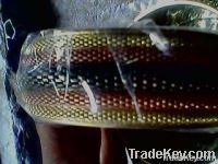 handicraft, imitation and fashion accesories