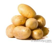 Hot sell 2012 new arrival Holland potato from china