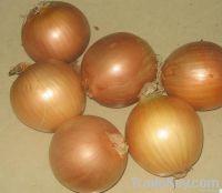 2014 fresh onion