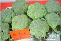 Chinese fresh green broccoli of 2012