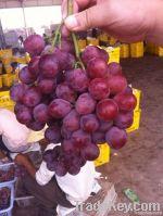 Fresh Red/Purple Grapes