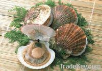 Frozen Whole Shell White Clam