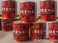 800g Tomato Paste