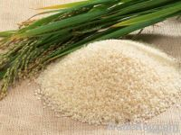 irri-6 and basmati and