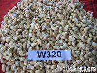 Raw Cashew Nut W240 | W320 | W450