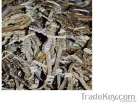 Dried Sea horses