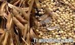 Soy Bean Waste