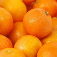 Premium fresh oranges or