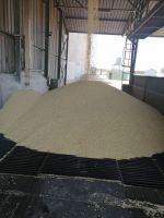 Hot sales White maize /yellow corn and Maize Meal available