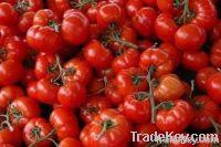 Tomatoe Paste