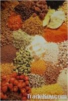 Powder Masala Flavours