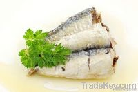 Canned Sardine / Mackerel in Vegetable Oil