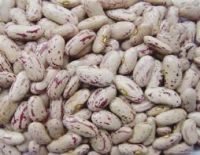 Speckled Sugar Beans