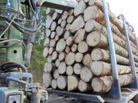 EUROPEAN ASH LOGS /SPRUCE BIRCH OAK /TIMBER AT COMPETITIVE PRICE