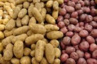 Exporting High Standard Agricultural Crops