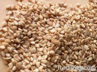 Sesame Seed
