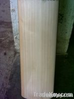 Hand Made A + Grade English Willow Cricket Bat