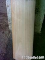 Hand Made A + Grade English Willow Cricket Bat