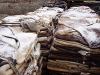 WET SALTED COW HIDES / WET