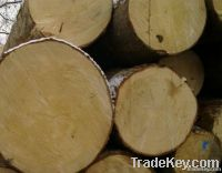 Pine Log For Sale (Abies Alba)