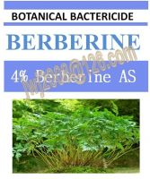 4% Berberine AS