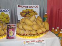 pakistani sindhri  mango