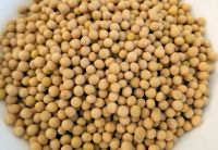 Soya Beans Soybeans Raw And Dried Soybeans