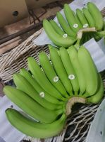 Banana  Cavendish Bananas