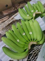 Banana, Cavendish Bananas, Fresh Green Cavendish Bananas