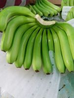 Banana, Cavendish Bananas, Fresh Green Cavendish Bananas